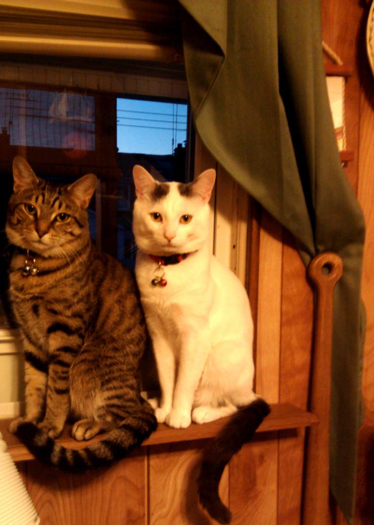 My Cats In The Window by Lovely-LaceyAnn-Art