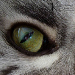 In the Eye of the Coon