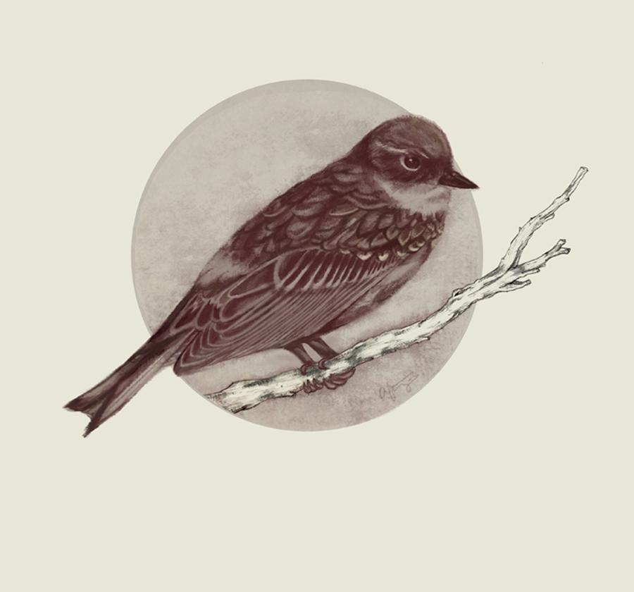 warbler by Aeirus