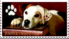 Wishbone And Books Stamp by WildSpiritWolf