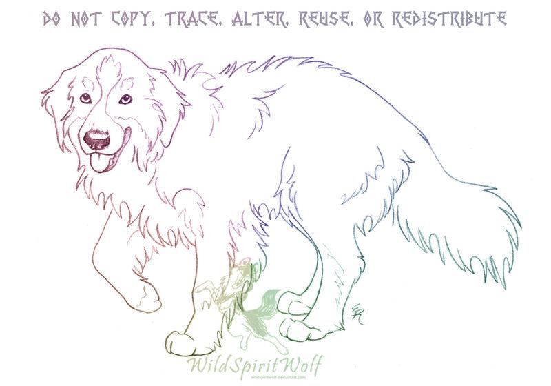Bernese Mountain Dog Sketch By Wildspiritwolf On Deviantart