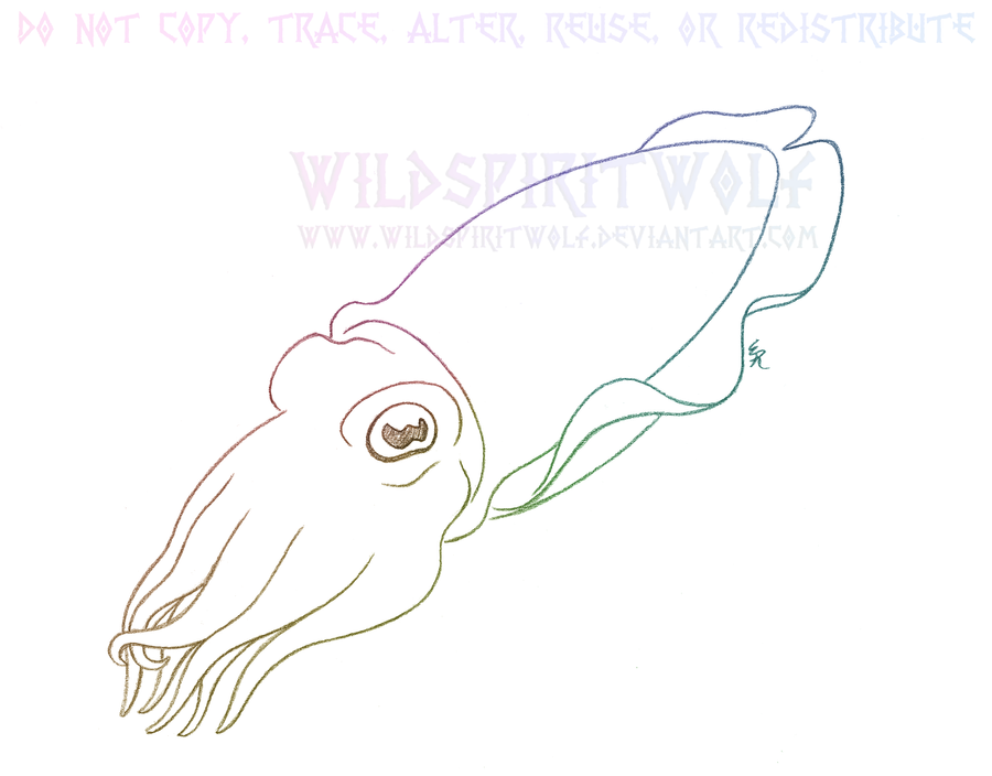 Cuttlefish Cephalopod Sketch by WildSpiritWolf on DeviantArt
