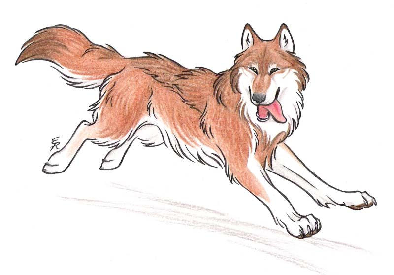 Orange Wolf Drawing Set Yourself Free by W...