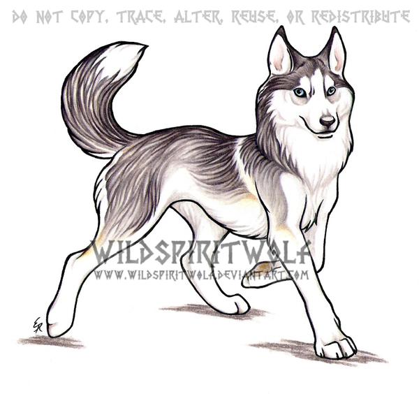 Trotting Husky Dog Commission by WildSpiritWolf
