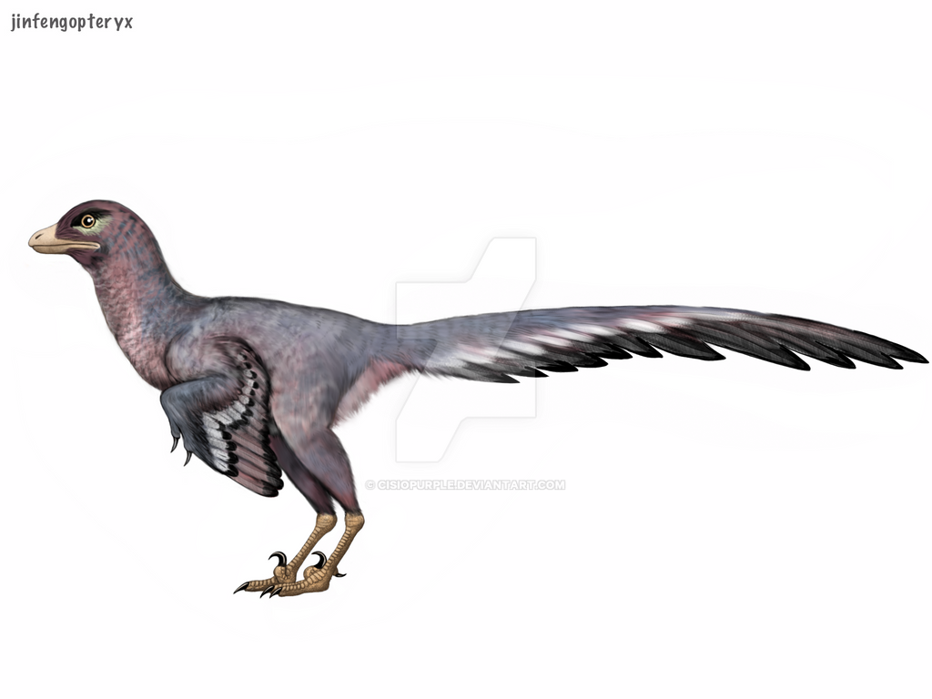 Resultado de imagen de jinfengopteryx