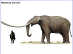 Mammut (or Zygolophodon) borsoni