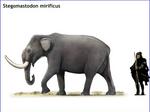 Stegomastodon mirificus