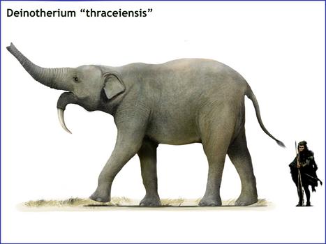 Deinotherium traceiensis
