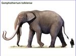 Gomphotherium tolkiense