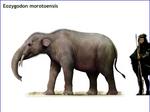 Eozygodon morotoensis by cisiopurple