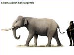 Sinomastodon hanjiangensis