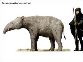 Palaeomastodon minor