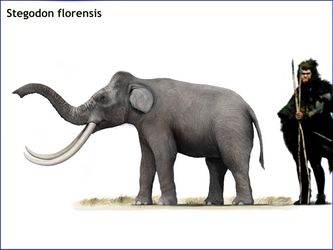 Stegodon florensis