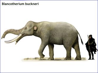 Blancotherium buckneri