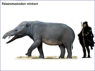 Palaeomastodon wintoni