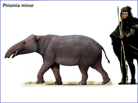 Phiomia minor