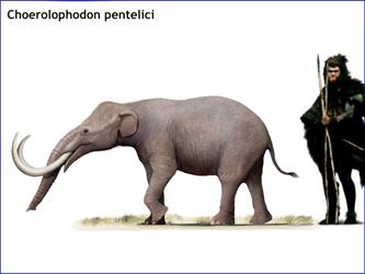 Choerolophodon pentelici