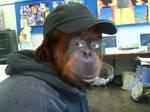 Monkey Joe