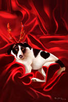 Happy Reindeer by MonicaMarinho