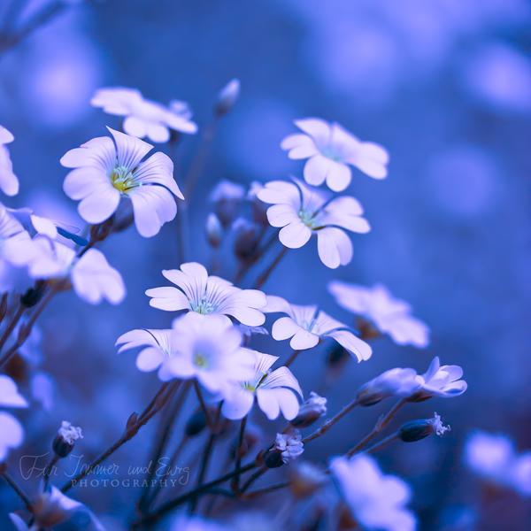 Just Blue by FurImmerUndEwig