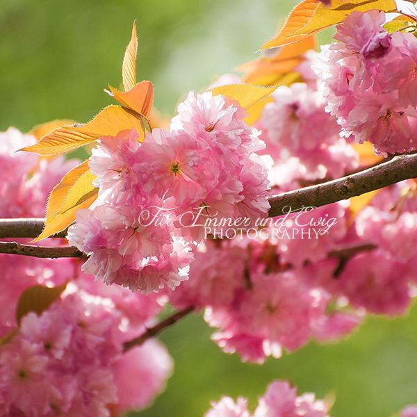 Spring Fairytale by FurImmerUndEwig