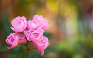 Pink Rain by FurImmerUndEwig