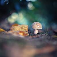 Mushroom Magic by FurImmerUndEwig