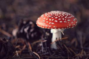 Nature's little treasures