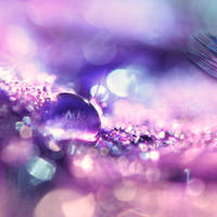 Purple by FurImmerUndEwig