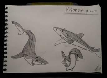 Blue shark doodles by zebG