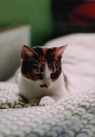 Cat No.1 by KatKrow