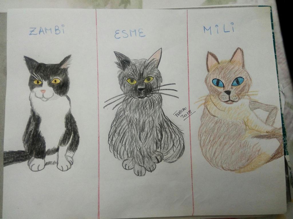 cats esmeralda zambi and mili by Sailorferchy