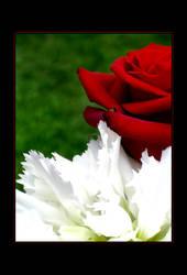 Rose I. by Budmil
