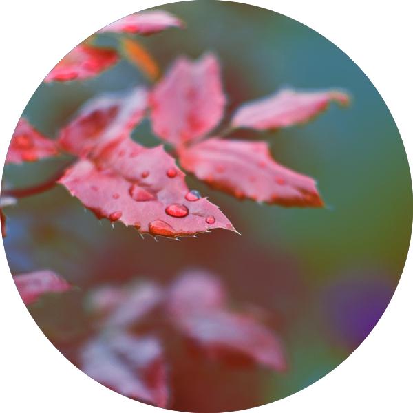 rainy day cercle by takingu