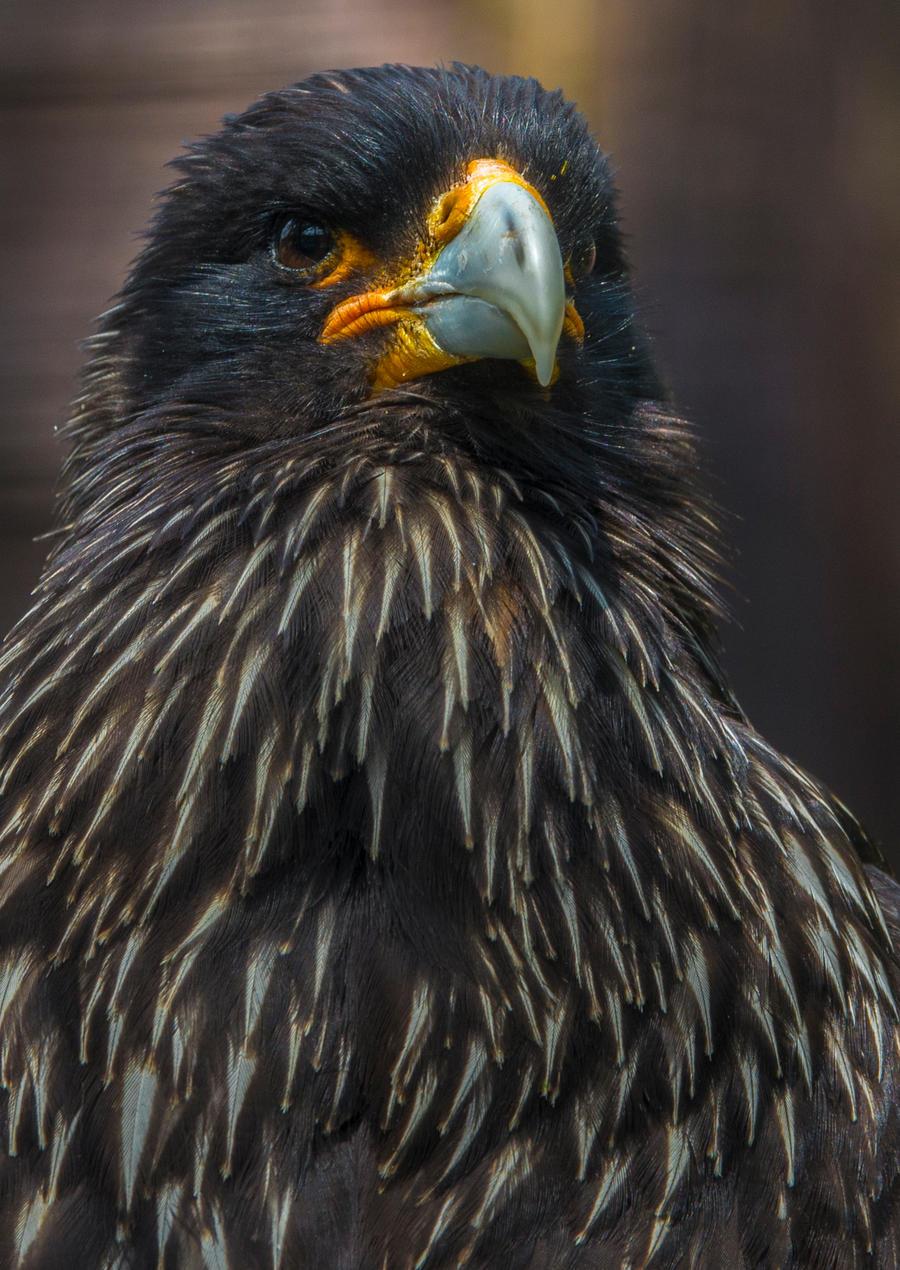 Bird 42 by tpphotography