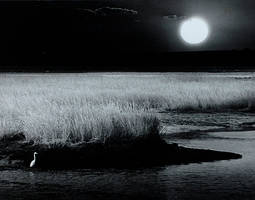 Egret, Egress, Sunset by Minorhero