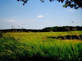 Meadow by starskq