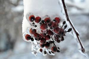 Group of Frozen Berries by Blazemorioz