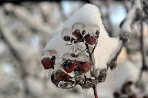Iced Berries by Blazemorioz