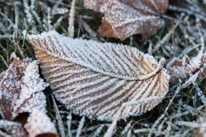Frost 04 by Blazemorioz