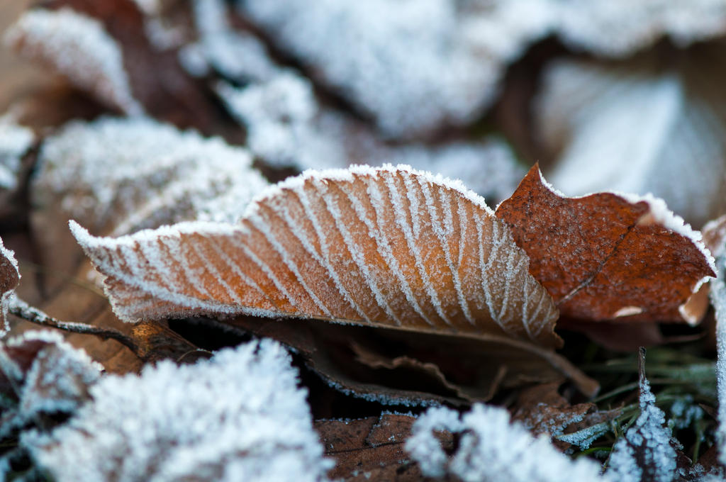 Frost 3 by Blazemorioz