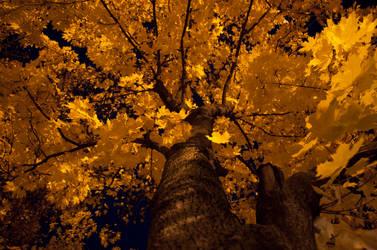 Fall by Blazemorioz