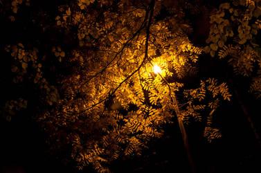 Light by Blazemorioz