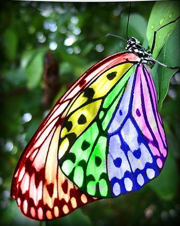 Rainbow Butterfly by MarchBreeze on DeviantArt
