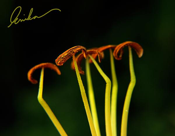 Pollen dancers by VintageWarmth