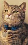 ::The Academic Cat::
