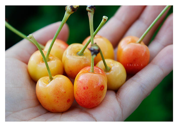 Organic Rainier Cherries by VintageWarmth