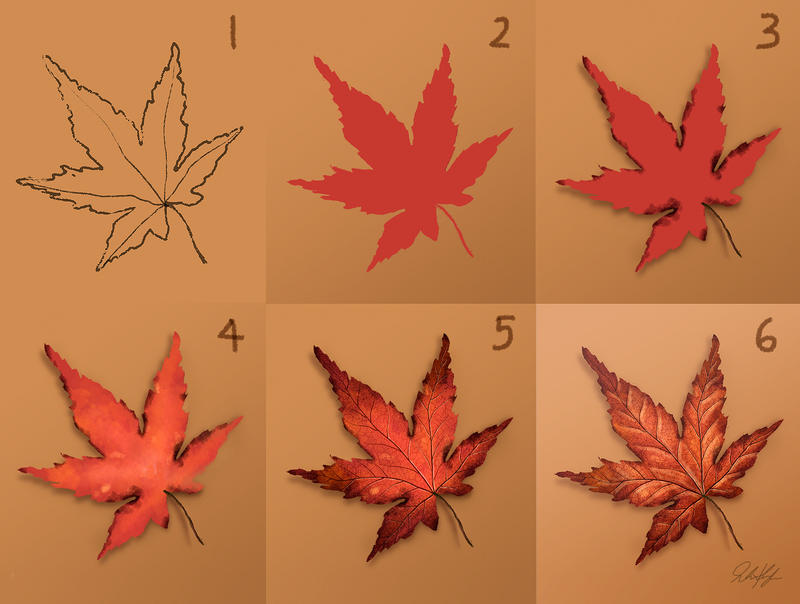 Time lapse: Drawing a Japanese Maple Leaf