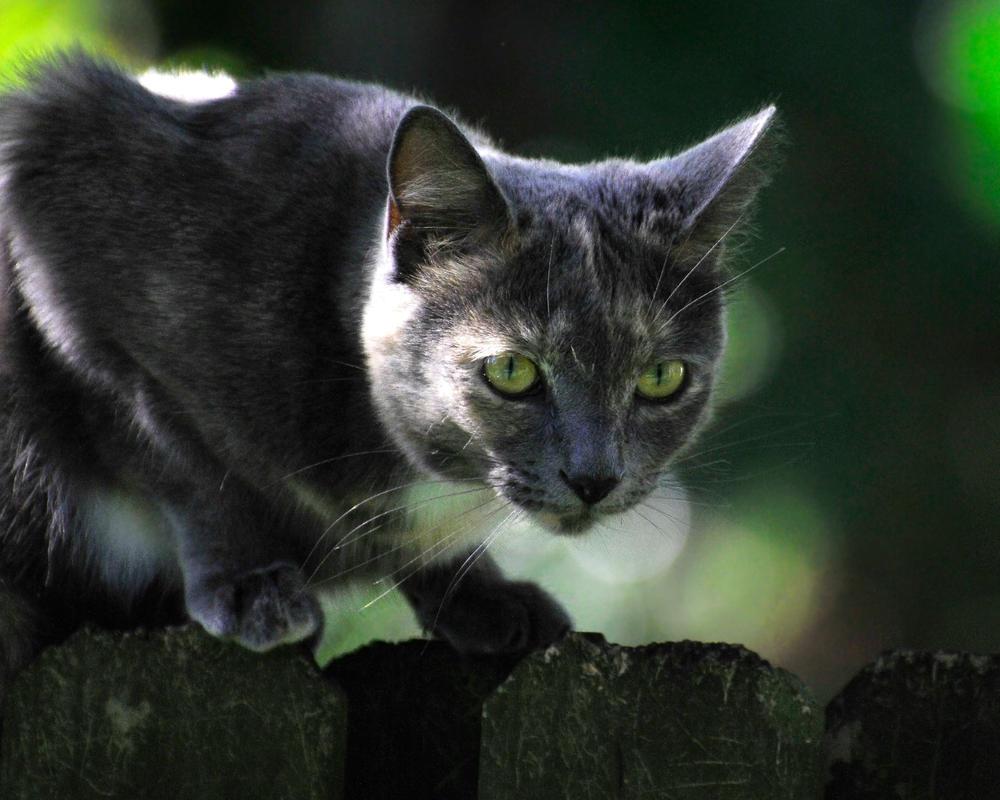 Die graue Maus, die keine ist by NB-PhotoArt