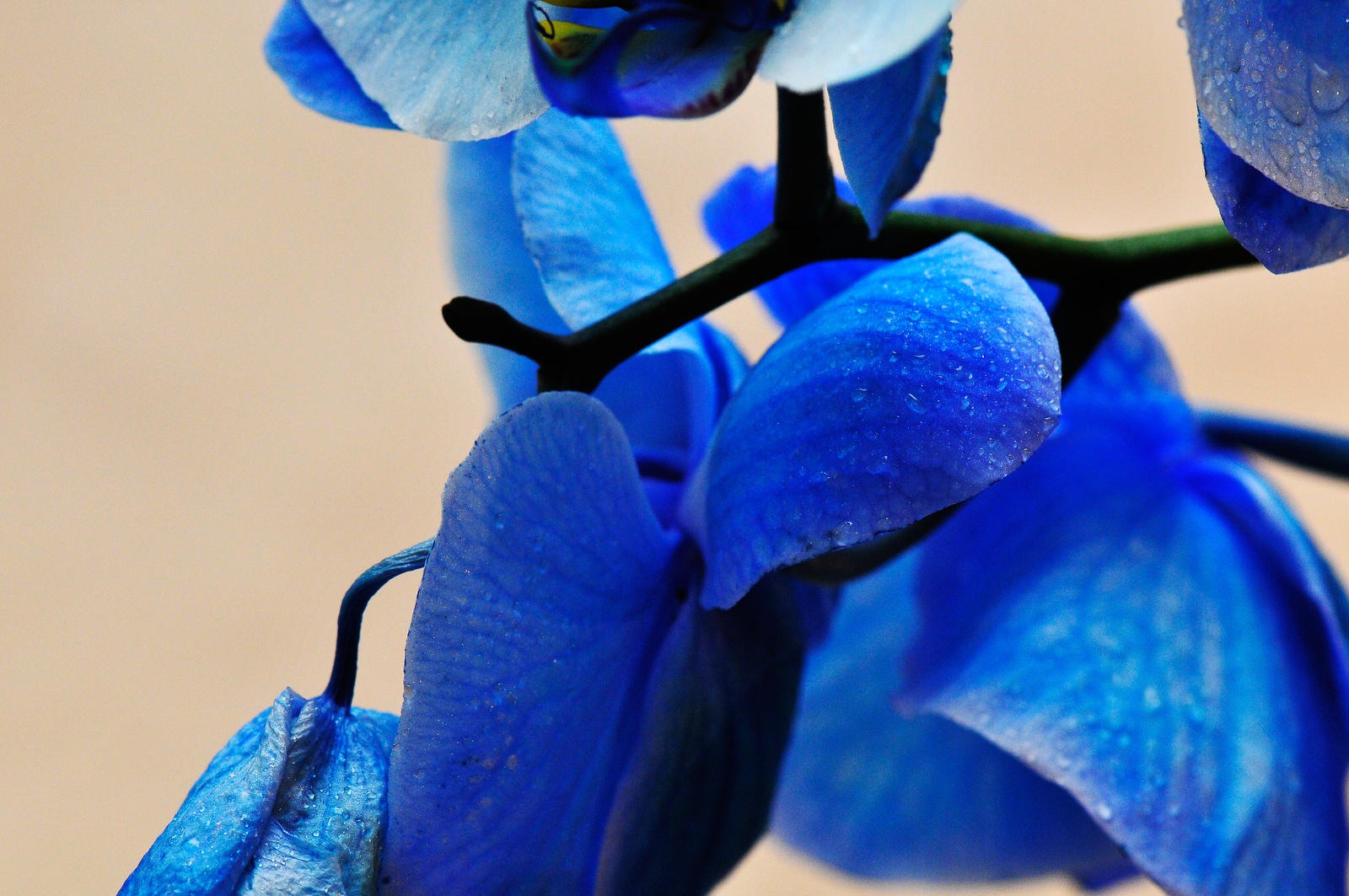 Shades of blue by NB-PhotoArt on deviantART
